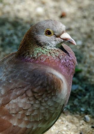 Bird in Sag Harbor