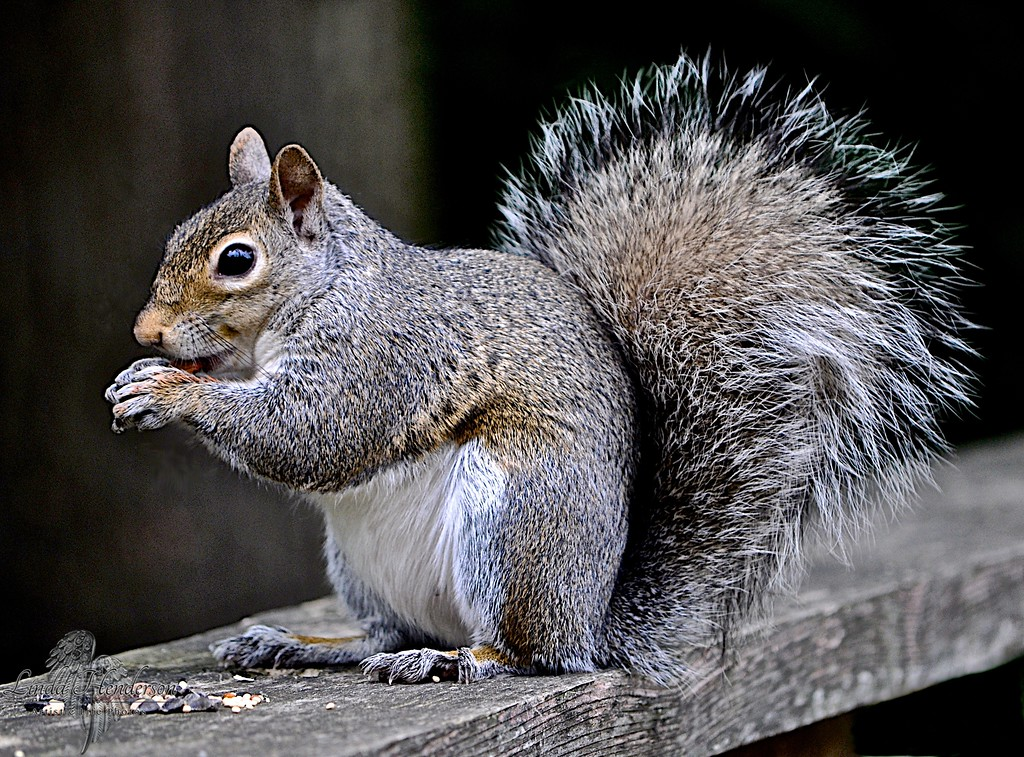 Handsome Squirrel