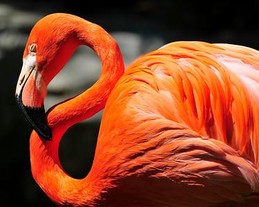 Flamingo LA Zoo