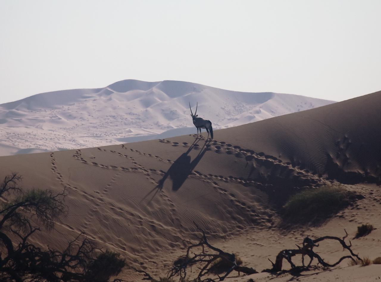 Sossusvlei, Oryx
