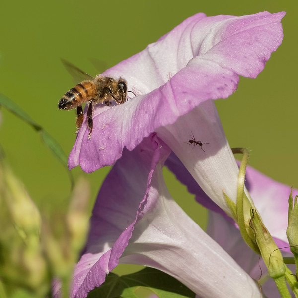 Bee!<br /> Location: Sarasota County, FL