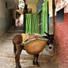Patient Donkey: Fez, Morocco
