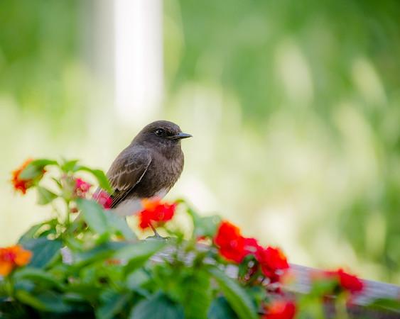 Phoebe in the garden