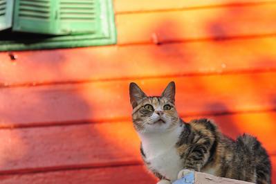El Gato, La Boca Buenos Aires
