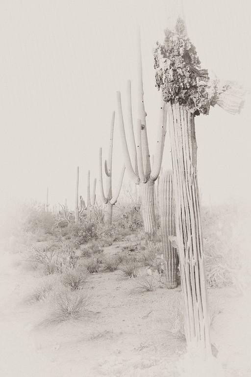 Desert Line Up