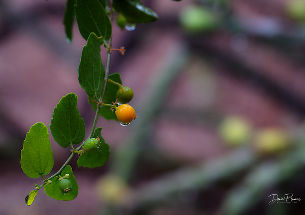 Wet Berry Macro