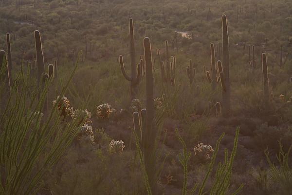 Sonoran Lights