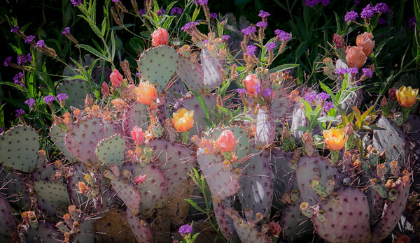 Prickly Pear Floral Arrangement