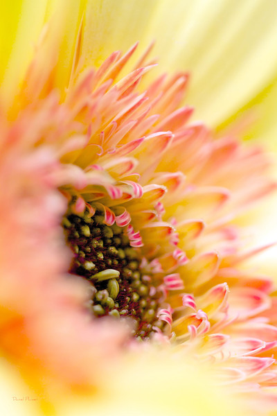 Ivy's Flower