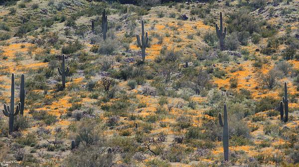 Desert Impressionism