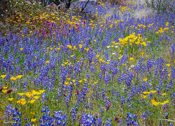 Wildflower Impressionism