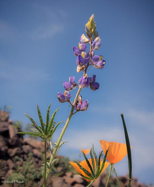 Wildflower Life