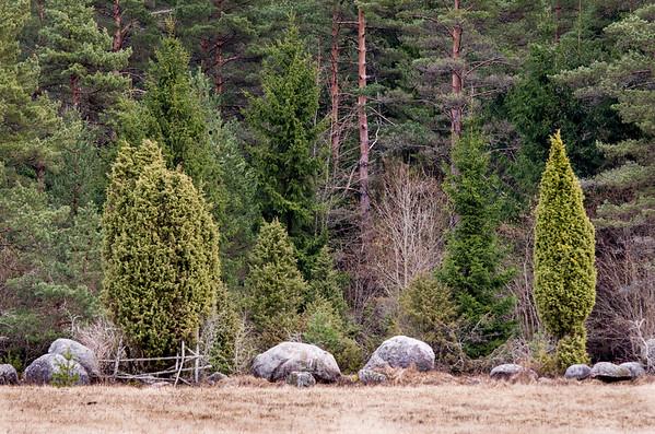 Lääne-Eesti kevadine maastik