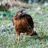 2011-10-13_Hawk_StirlingR_0001