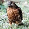 2011-10-13_Hawk_StirlingR_0002