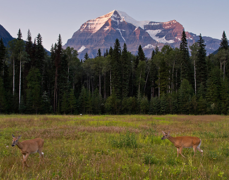 Deer and Mount Robson