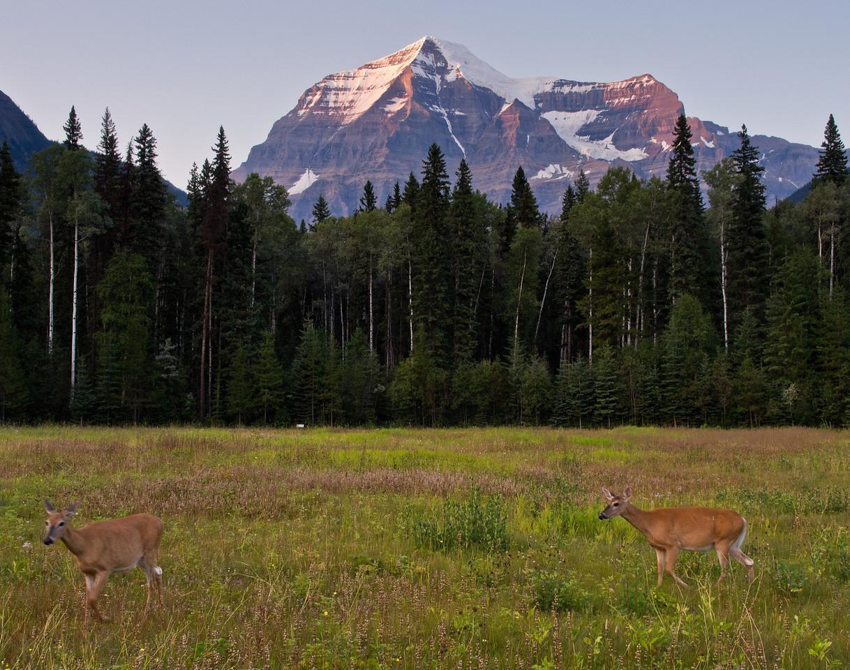 Deer and Mount Robson