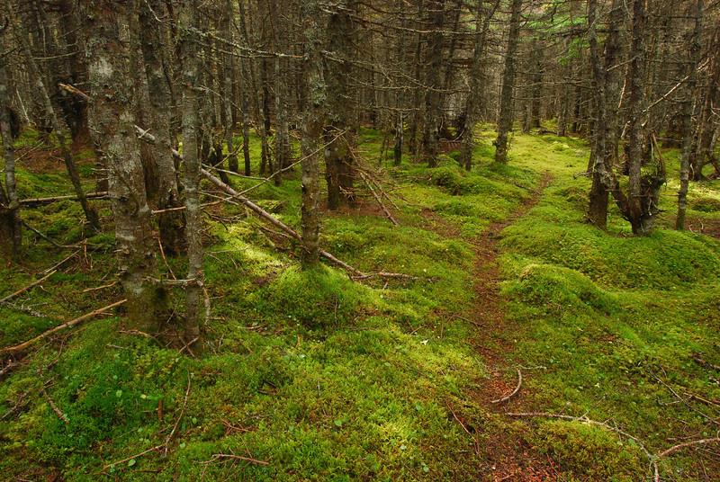 Sentier de cerf de Virgine - Île d'Anticosti, Québec
