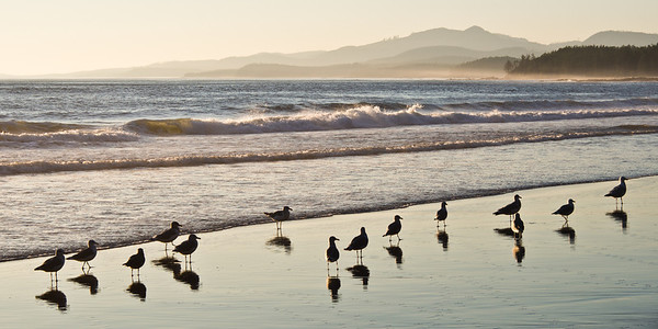 Seagulls on the beach - West Coast Trail