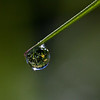 Focused image in dew drop.