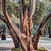 quite area next to the Forbidden City. There were many wedding photos taken in this area. These are cypress trees