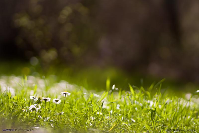 Grassland Intimate