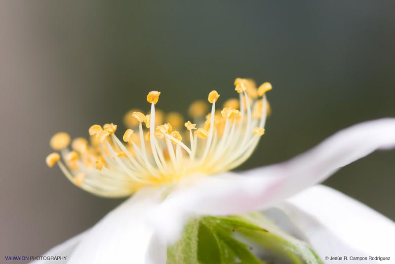 Garland of lights.<br /> Dog rose flower.