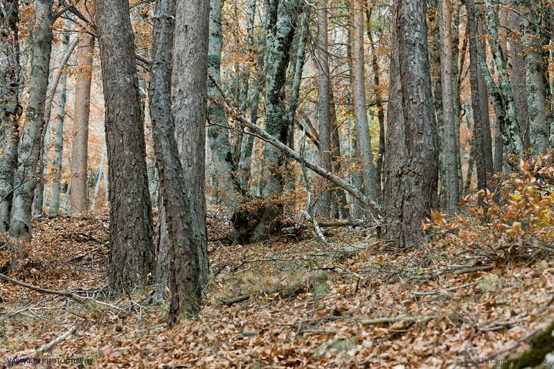 Fangorn Forest.