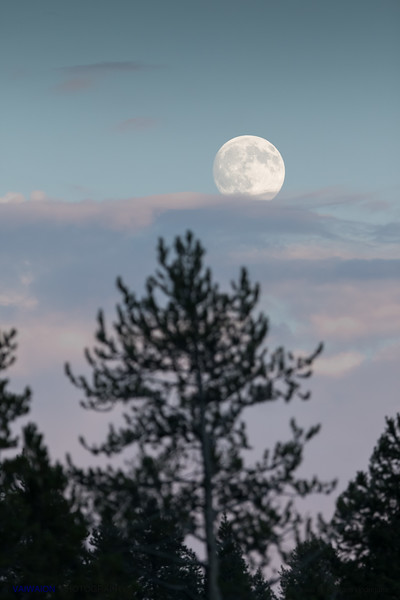 Full moon in Yellowstone