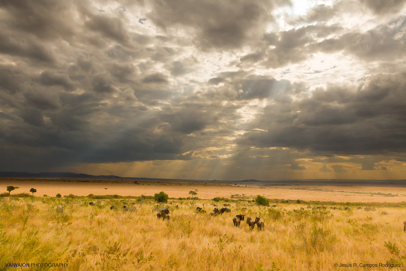 The skies over Masai Mara (7)