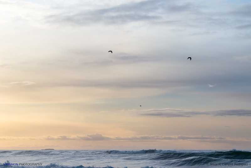 Birds over the Diamond Beach