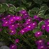 Flower-043