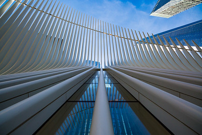 Up the Oculus