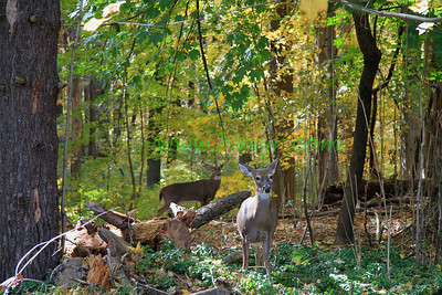 """It doesn't seem like it but this was taken in a township park less than a mile from Philadelphia, PA, city limits in October, 2009. It can be found in its original category """" Travel - PA """"  in gallery  """" Penna Oct, 2009 """" as  image # 0129B"""