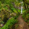 Elowah Falls in Springtime