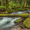 Unnamed Creek in the Gifford National Forest Washington