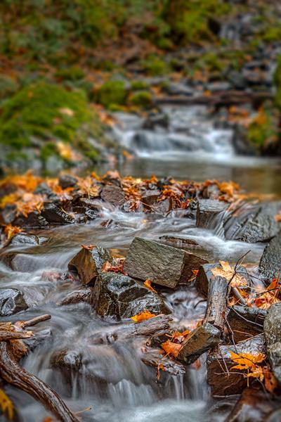 Starvation Creek in Focus