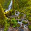 Foggy Ruckel Creek Falls