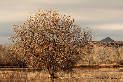 Bosque Del Apache NM