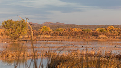 Golden hour at the Bosque Del Apache NM