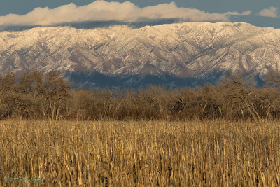 Winter On The Manzano Mountains . NM