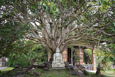 Buddha Statue Under Bodhi Tree on Grounds of Khamsum Yueley Namgyel Chorten