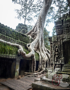 Ta Prohm Trees & Crumbling Stone