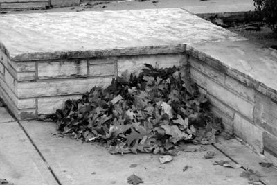 Leaves along a wall in Denver, CO