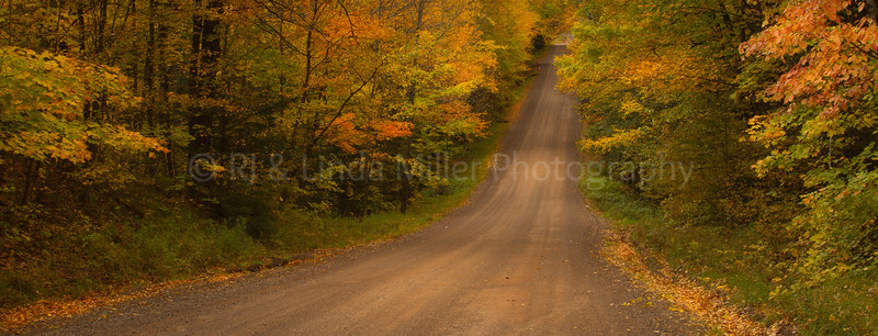 Fall Color Along Road, Bayfield County, WI