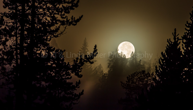 Silky Moon