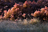 Fall shrubs