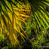 Palm fronds...