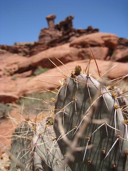 Moab Utah desert cactus