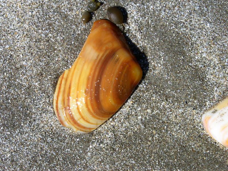 Hawaii - Black Sands Beach